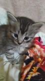 Подарю симпатичных котят