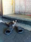 Котята готовы найти хозяина , кушаю , ходят в туалет и живут с собакой