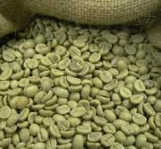 Зеленый дикий кофе Робуста сырой Уганда