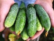 Продам овощи с огородной грядки от 1 кг